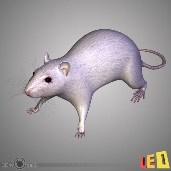 3ds Max Anatomy Rat