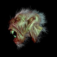 3d werewolf wolf model