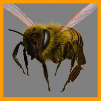 honey bee 3d ma
