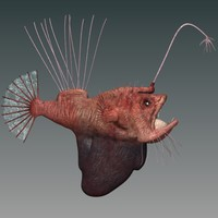 hairy angler fish obj