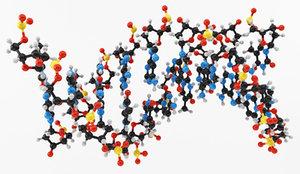 3d model dna nucleic acid
