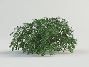 bush flower 3d model