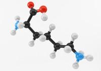 amino acids max