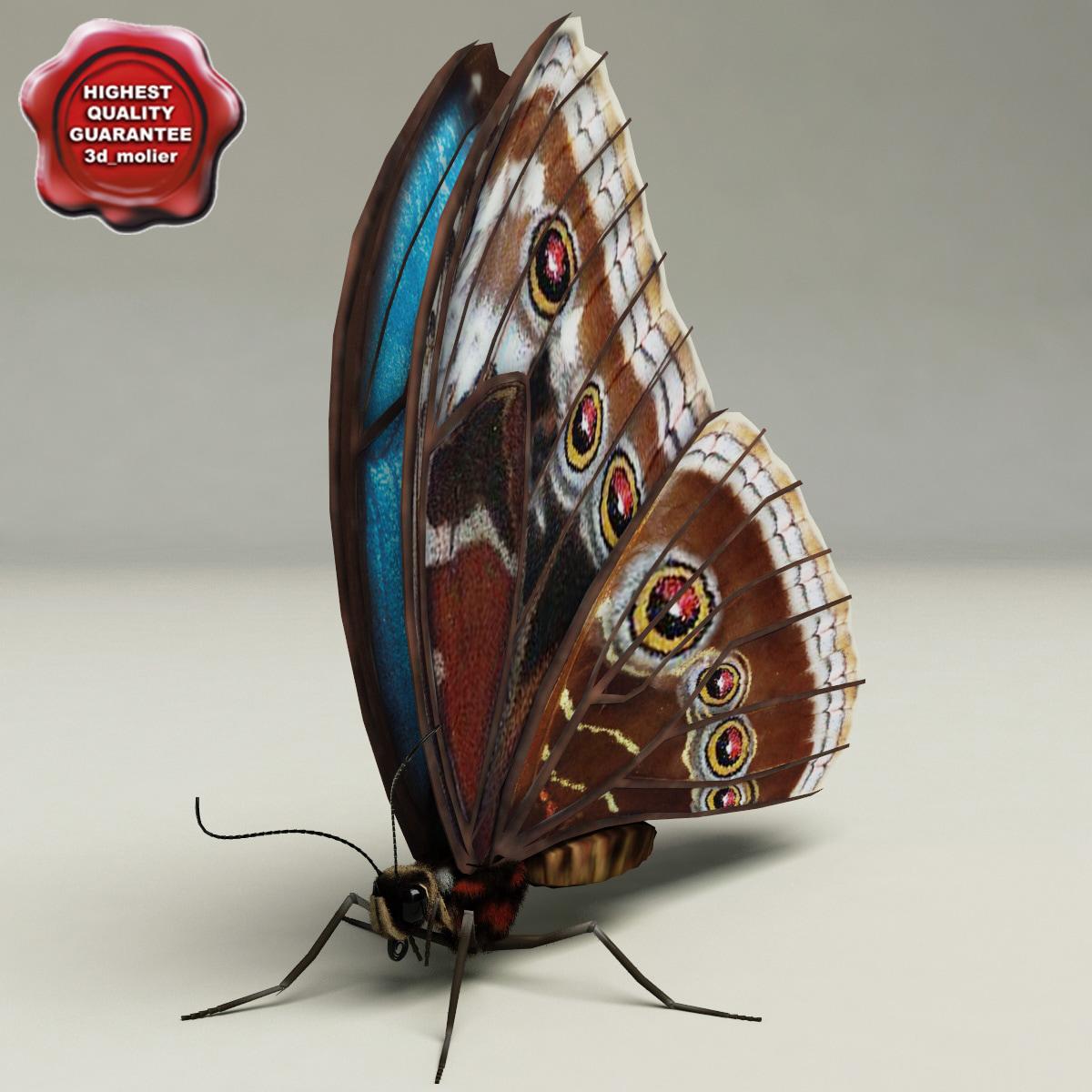 3d model of blue morpho butterfly