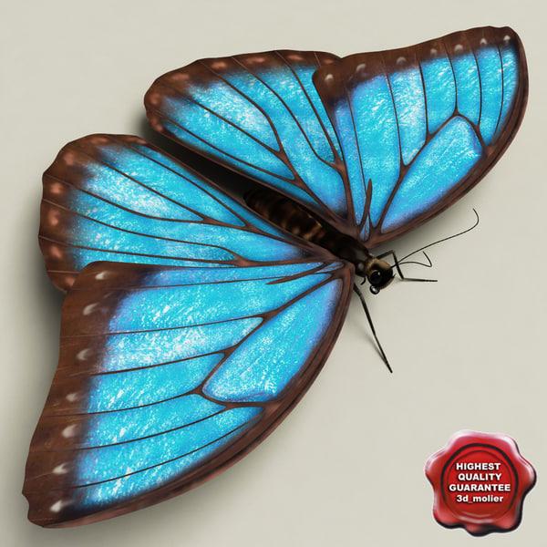 blue morpho butterfly pose5 3d model