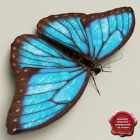 Blue Morpho Butterfly Pose5