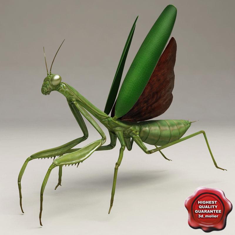 max mantis modelled