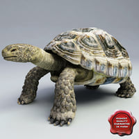 lightwave turtle testudines