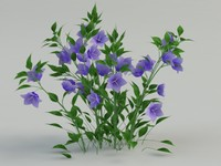 bellflower flower 3d max