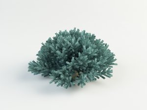juniper blue star 3ds