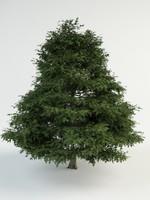 quercus palustris 3d model