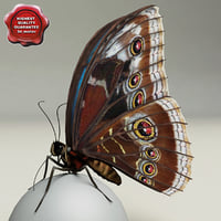 3d model blue morpho butterfly pose6