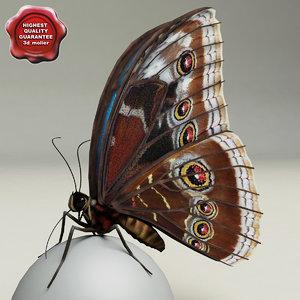 3d model blue morpho butterfly pose6