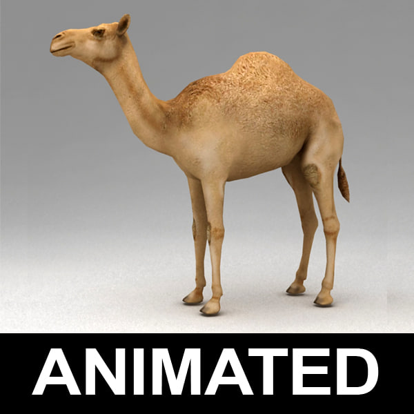 rigged dromedary camel walk animation 3d model