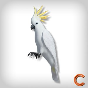 3d model parrot cacatua