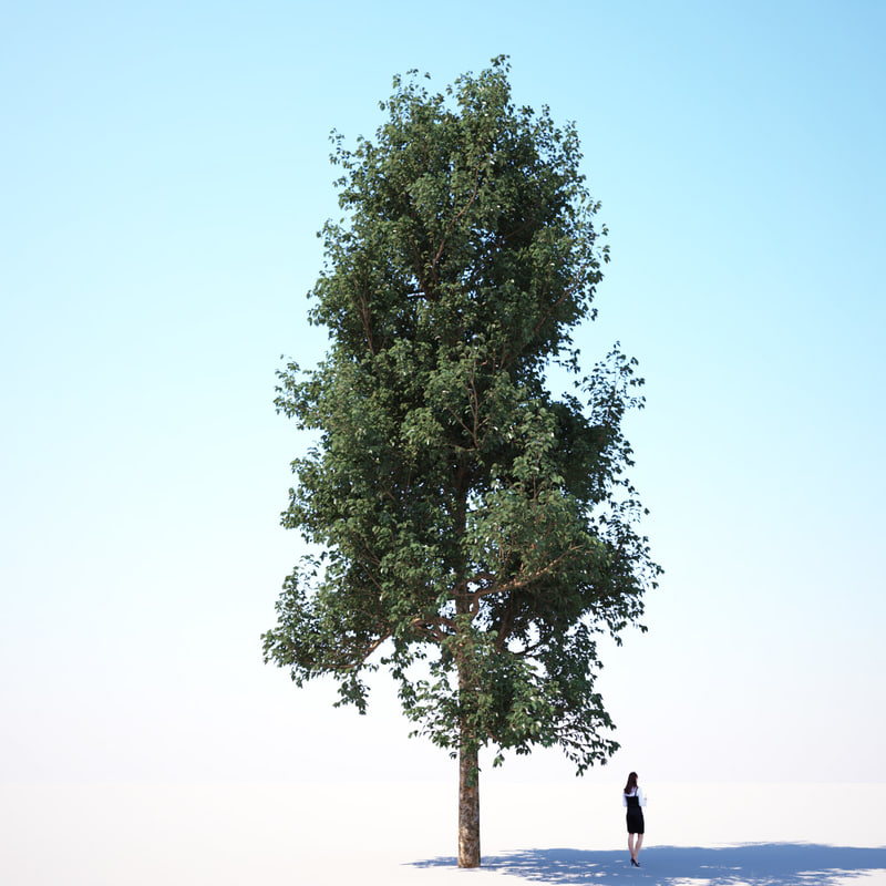 3d generic tree - model