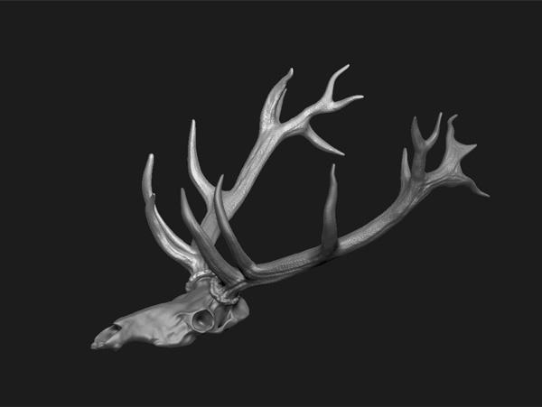 3dsmax skull antlers european red