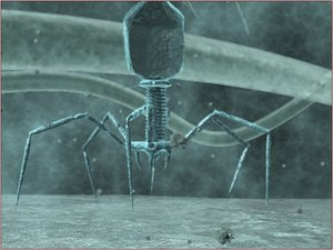 lightwave bacteriophage phage