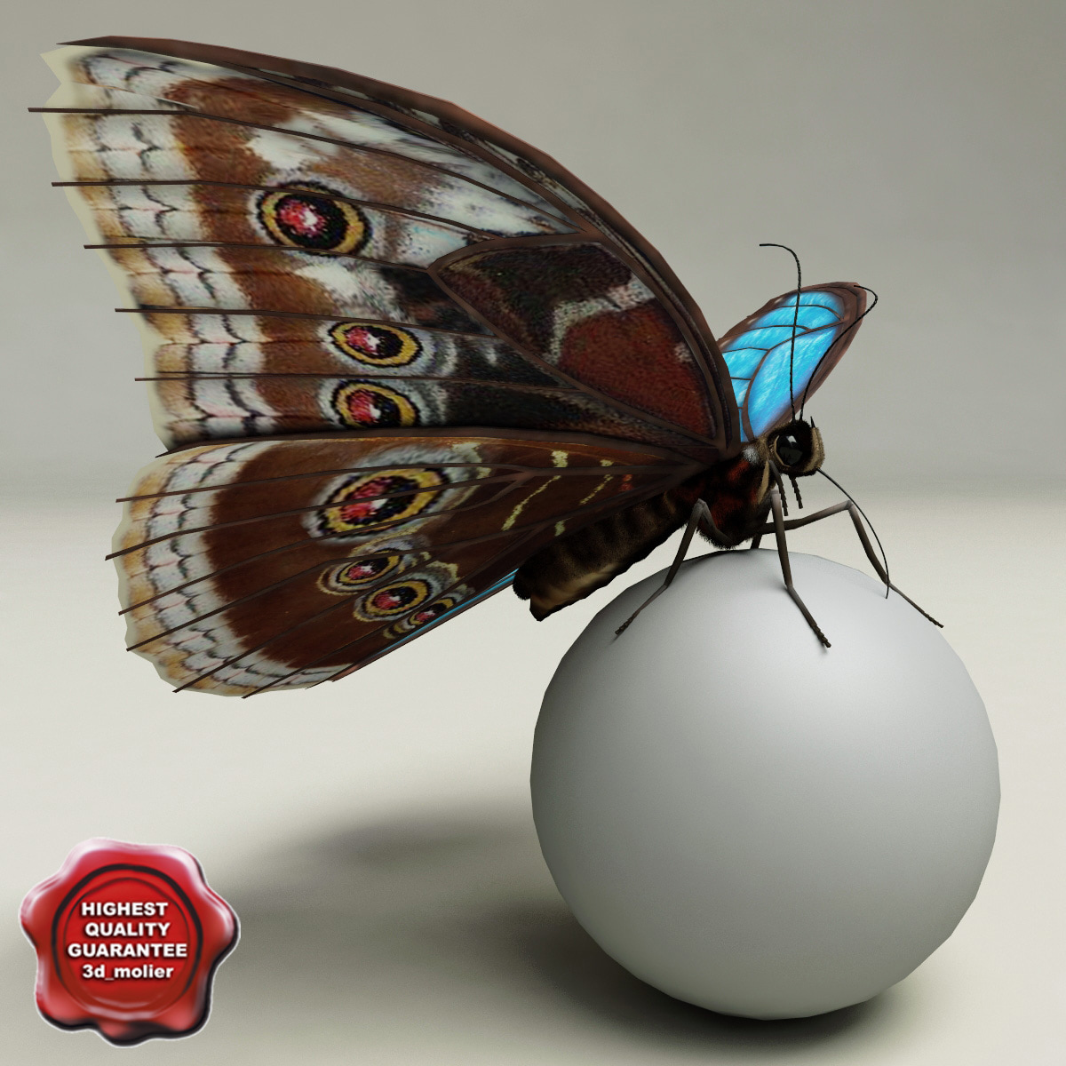 blue morpho butterfly pose3 3d 3ds