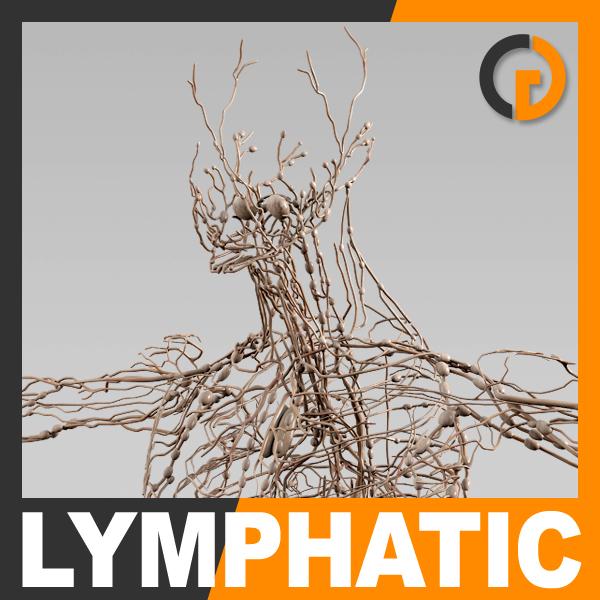 human lymphatic - lymph 3d 3ds
