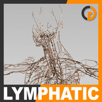 human lymphatic - lymph 3d 3ds