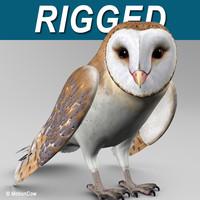 Barn Owl  Folded Wings