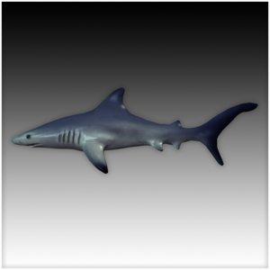 s sharks 3d model