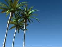 directx tropical palm tree leaf