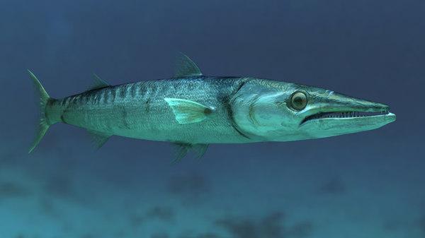 maya animation barracuda