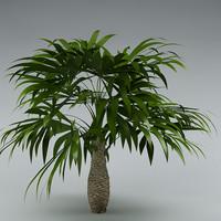 bush palmetto palm 3d model