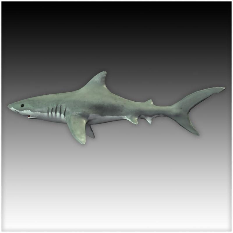 games sharks 3d model