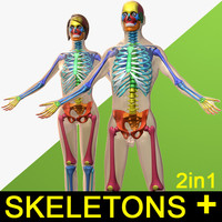 human male female skeleton 3d model