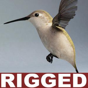 hummingbird rigged 3d model