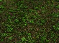 max field clover