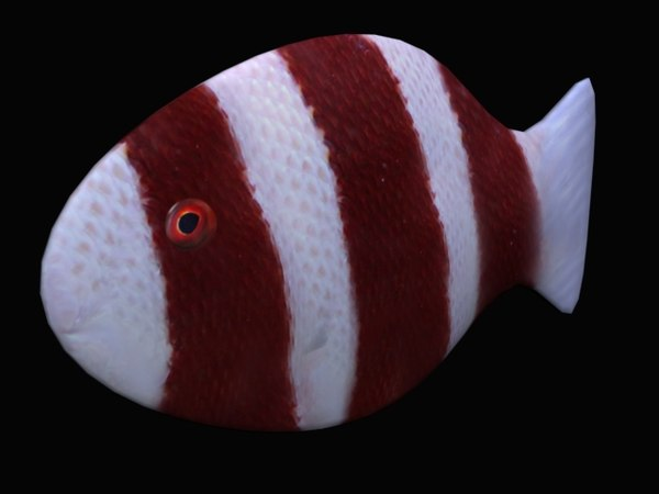 3d model of tropical fish red