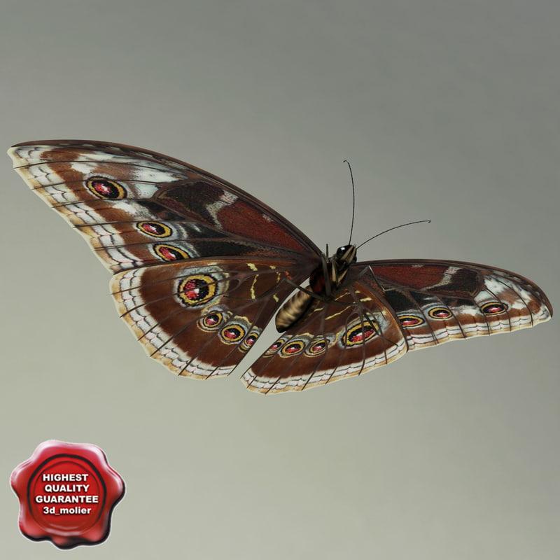 blue morpho butterfly pose4 3d model