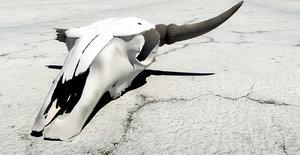 3d cattle skull