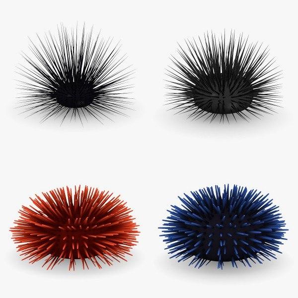 3d sea urchins model