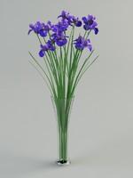 iris in vase