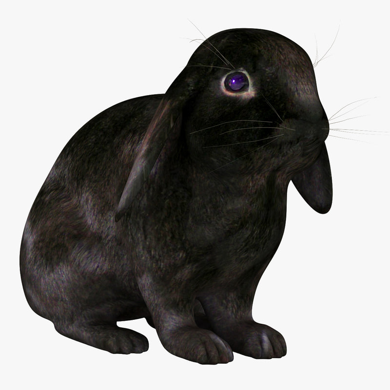 rabbit black 3d model