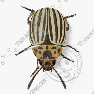 3d colorado potato beetle