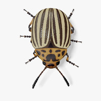 3d model colorado potato beetle