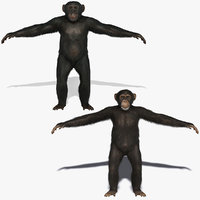 3d chimps fur