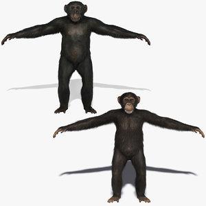 3d chimps fur