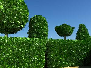 free max model shrub bush
