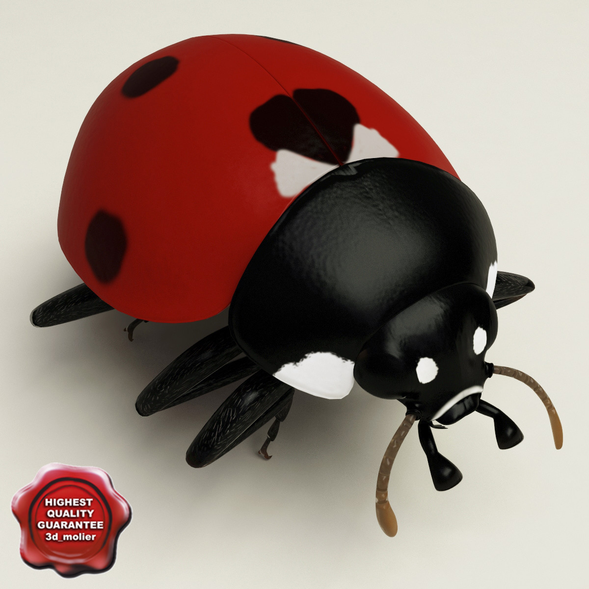 3d model ladybug pose3