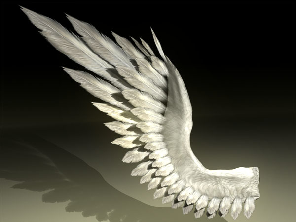 wings bird angel 3d model