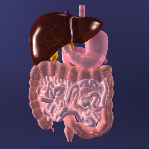 digestive 3ds