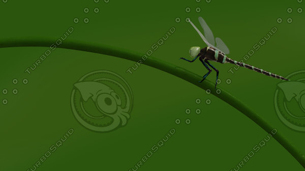 3d model photo realistic dragonfly