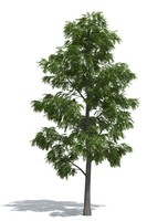 Acacia tree (2) by 3dmentor